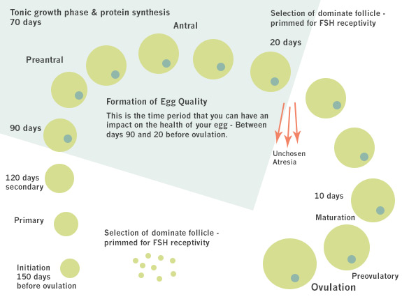 Egg Quality | Acubalance Wellness Centre